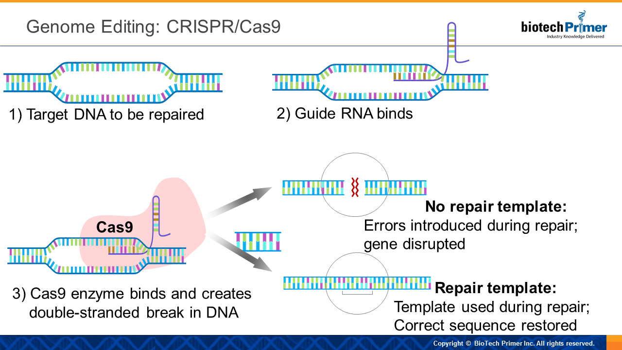 The Science Of CRISPR/Cas9 - finally explained for the non